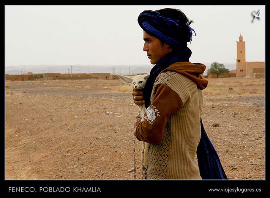 Feneco en el poblado de Khamlia