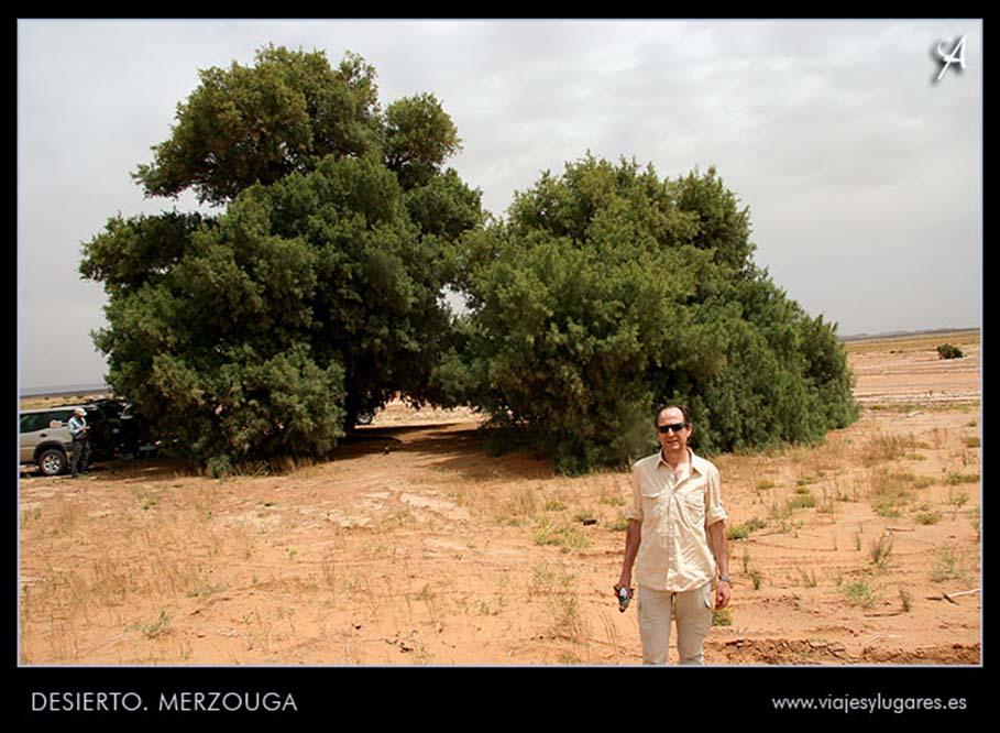 árbol en el desierto de Merzouga