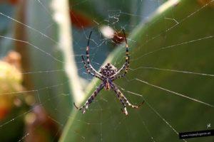 Fauna protegida en las islas Columbretes