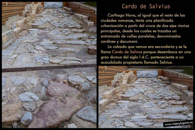 Cardo de Salvius