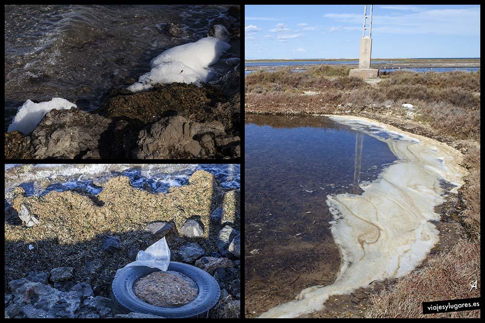 Muerte de este ecosistema de La Manga del Mar Menor